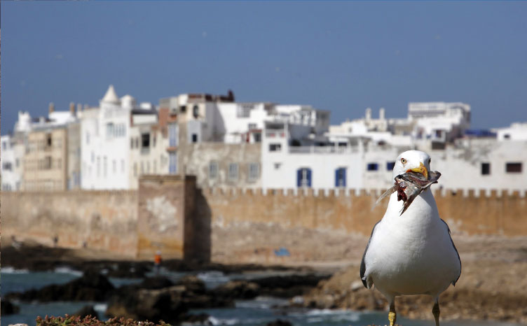 Taghazout - Marruecos | viajar haciendo yoga - Apasho