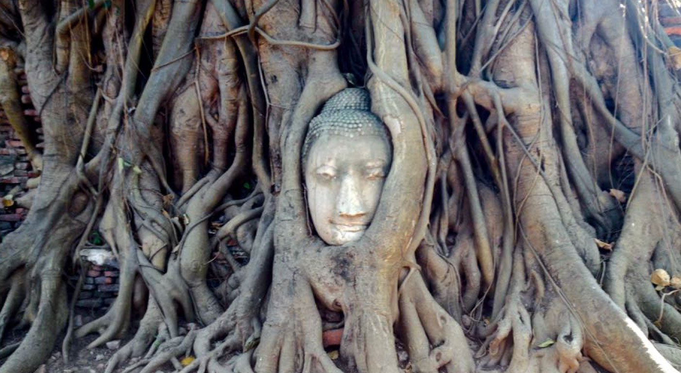 Viaje yoga Tailandia - Buda enraizado en árbol | apasho yoga