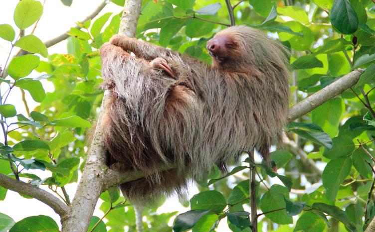 Tortuguero - Costa Rica | viajar haciendo yoga - Apasho
